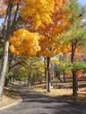 Woodlawn Cemetery & Arboretum, Dayton
